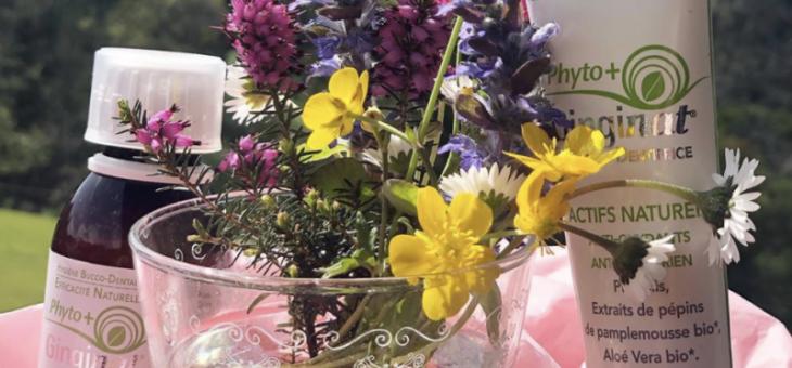 Ginginat : des produits pour vos gencives faits par les abeilles et la nature !